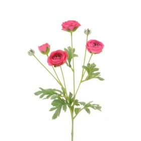 Ranunculus Spray Beauty